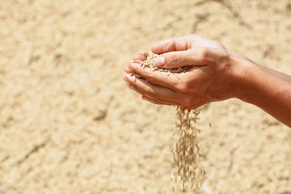 C начала сезона Россия экспортировала 22,8 млн т зерна, включая 19,7 млн т пшеницы, — соответственно на 17 и 15% меньше, чем годом ранее