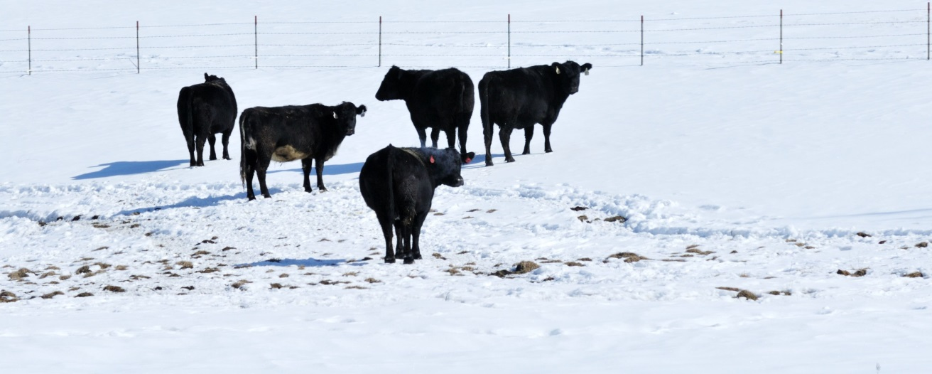 Обзор рынка молока и говядины за февраль