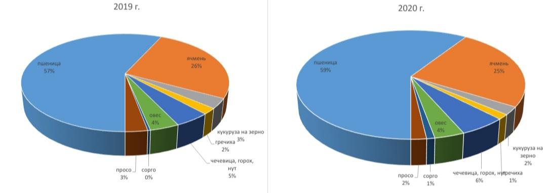 Структура сева зерновых культур в Оренбургской области в 2019–2020 гг.
