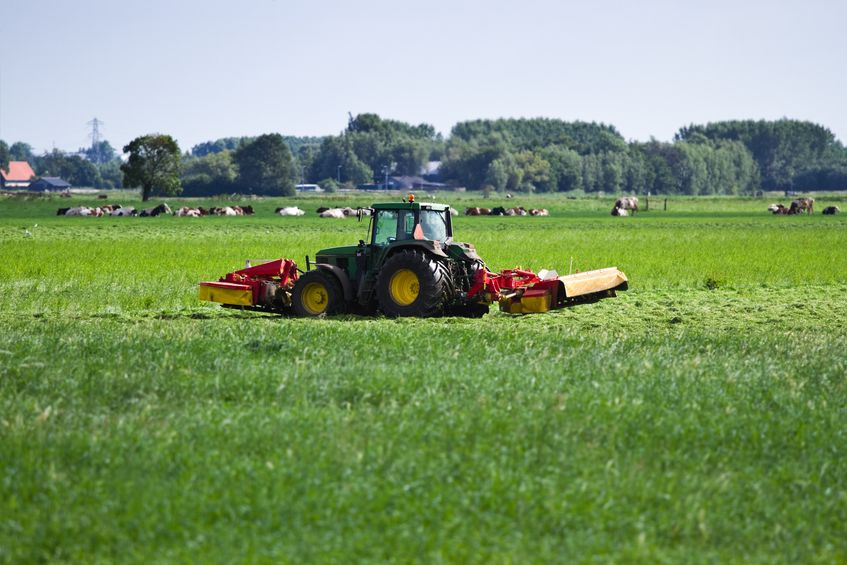 Под силосные культуры, многолетние и однолетние травы в этом году отведено 71,5 тыс. га