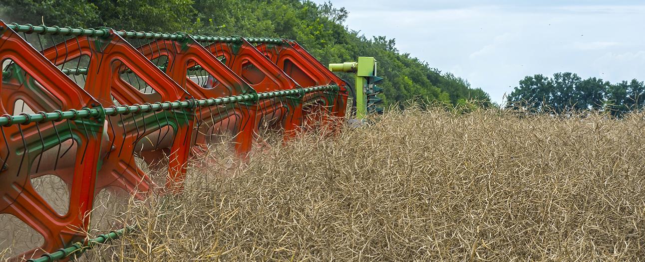 Еженедельный обзор рынка масличных от 6 июля