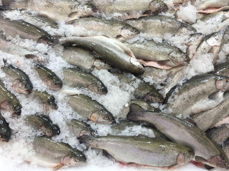 Всего в путину-2020 промышленные предприятия Чукотки смогут добыть 2 855,6 т красной рыбы