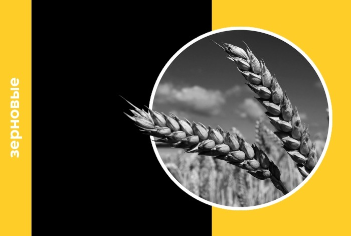 Поддержку ценам на российском рынке, по оценке «Центра Агроаналитики», продолжает оказывать увеличение внутреннего спроса на зерно
