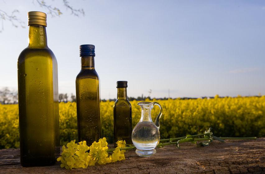 Рапс – вторая в мире масличная культура по объёмам производства после сои