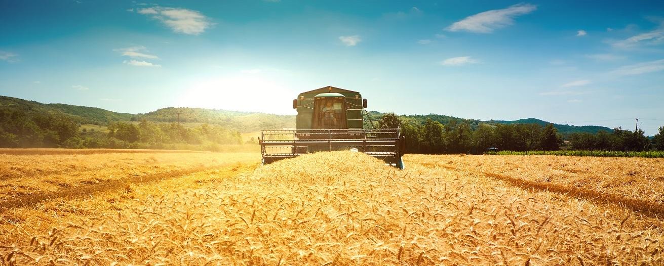 Ход уборочных сельхозработ по данным на 11 августа