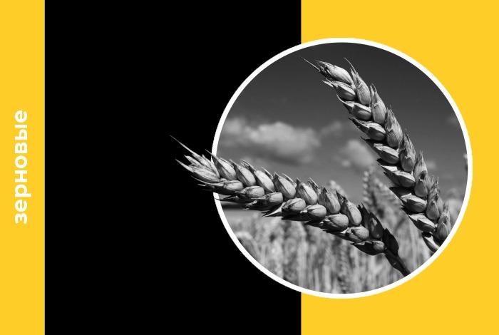 За период с 17 по 24 августа цены на зерно на мировом рынке, по оценке «Центра Агроаналитики», изменились разнонаправлено