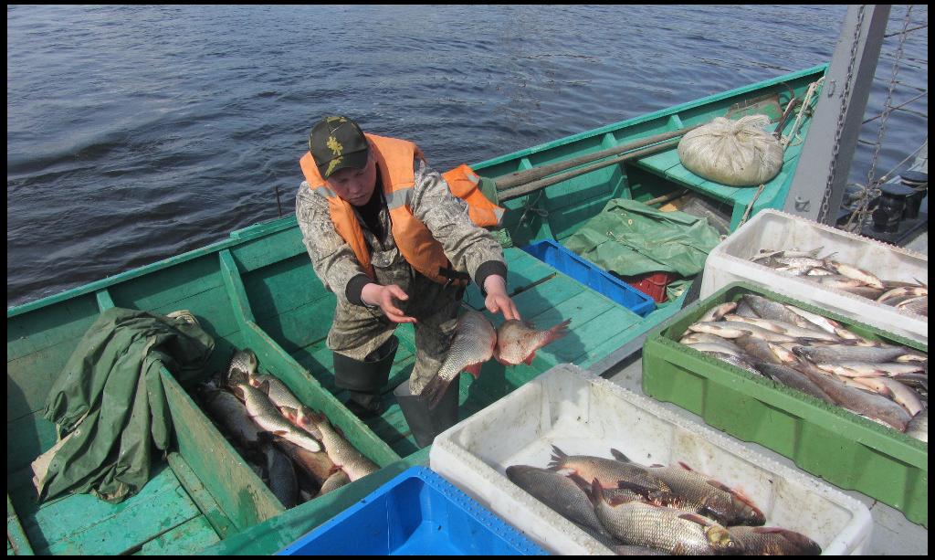 В лидерах добычи – Тазовский, Шурышкарский и Приуральский районы, на которые пришлось более 60% всего улова