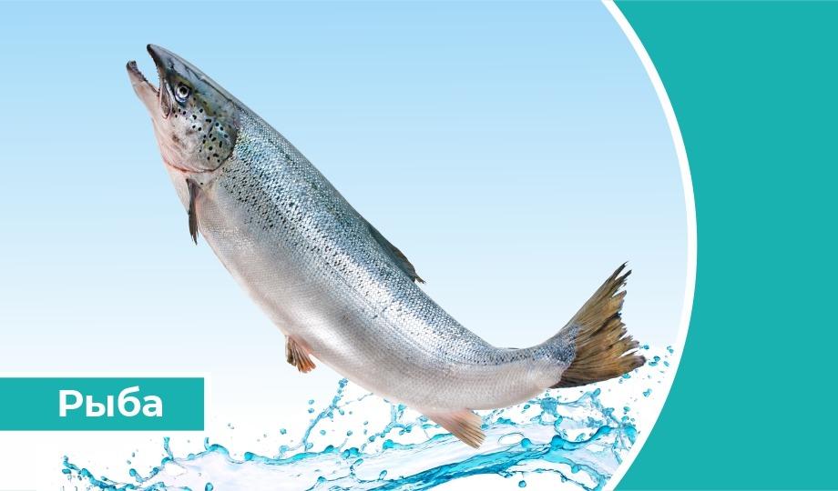 Дайджест «Рыба»: за пять лет потребление рыбы в России снизилось на 30%