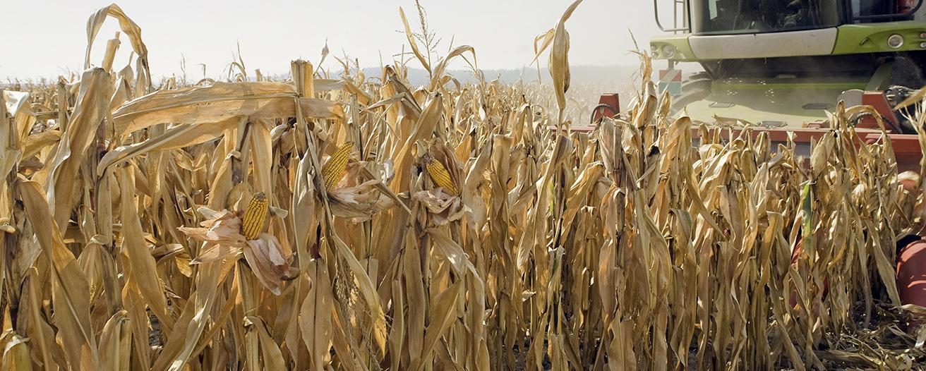 Еженедельный обзор рынка зерновых от 27 октября