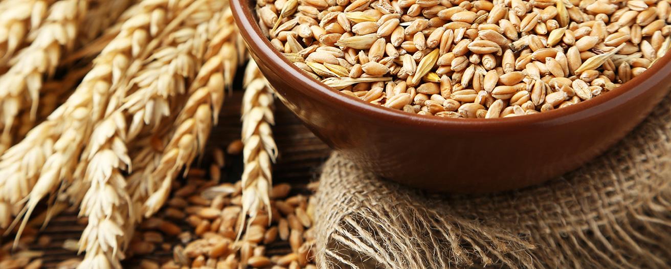 Еженедельный обзор рынка зерновых от 18 ноября