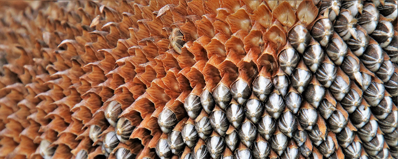 Ежемесячный обзор рынка масличных за январь
