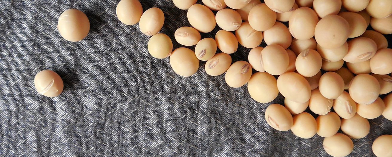 Еженедельный обзор рынка масличных от 18 января