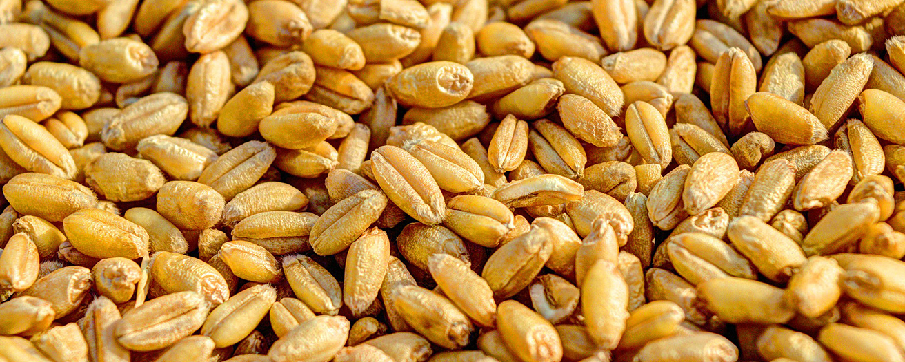 Ежемесячный обзор рынка зерновых за январь
