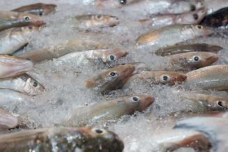 Экспорт рыбы из России вырос на 6,3%, до 4,5 млрд долларов