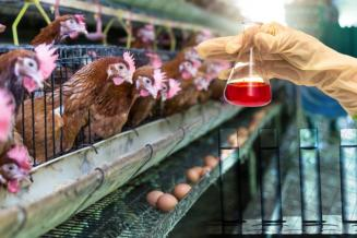 На субсидии ветеринарным лабораториям в 2022 году направят 2 млрд руб.