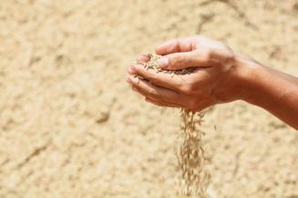 Минсельхоз планирует установить квоту на экспорт зерна из России в размере 20 млн тонн