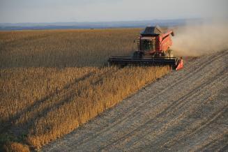 Урожай сои в РФ достиг исторического максимума