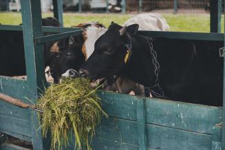 Фермеры Ростовской области увеличили объемы сельхозпроизводства