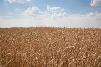 Волгоградская область в числе лидеров по возвращению сельхозугодий в оборот
