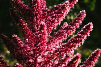 Фермеры Бурятии будут выращивать редкие байкальские лекарственные растения