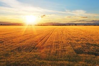 В 2019 году Кубань внесла весомый вклад в российский урожай зерновых