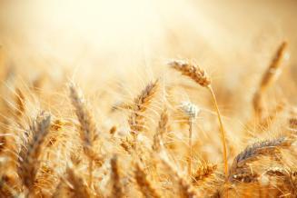 В Кемеровской области подведены предварительные итоги года в сельском хозяйстве