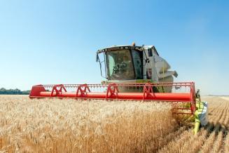 В 2019 году урожайность зерновых в Калининградской области выросла на 13%