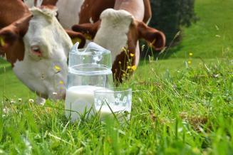 Сельхозорганизации Кировской области увеличили производство молока