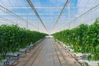 Ввод в эксплуатацию 4-й очереди теплиц ТК «Елецкие овощи» в Липецкой области намечен на I квартал