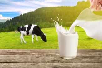 Хозяйства Вологодской области увеличили выработку молока на 5,2%