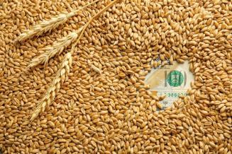 Экспорт пшеницы из России в 2019 году снизился на 27,6%