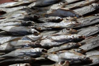 Астраханские производители увеличивают поставку воблы в США