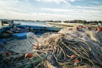 В Псковской области подвели итоги вылова рыбы в российской части Псково-Чудского водоема