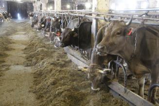 В Смоленской области построят молочный комплекс на 3 тыс. голов КРС