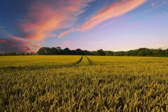 В 2019 г. в Чувашии зарегистрировано 502,9 тыс. га земель сельскохозяйственного назначения