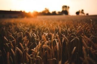 В 2019 году Россельхознадзор проинспектировал в Псковской области 10 000 т зерна и продуктов его переработки