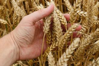 К 24 января в Чувашии было проверено 45,7 тыс. т семян яровых зерновых и зернобобовых культур