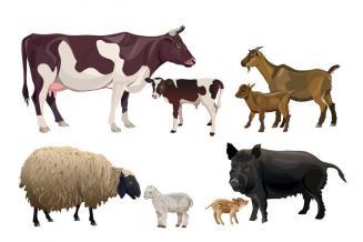 В Свердловской области растет производство животноводческой продукции