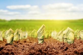 М. Мишустин: Россия занимает 7-е место в мире по притоку иностранных инвестиций в аграрную отрасль