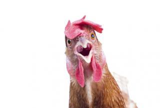 В Минсельхозе отметили ведущую роль птицеводства в обеспечении продбезопасности