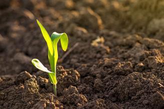 Аграрии Рязанской области обеспечены семенами зерновых культур на 105%
