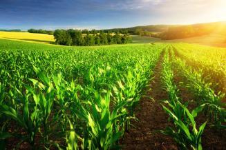 Ученые создали датчик для защиты урожая от загрязнения химикатами