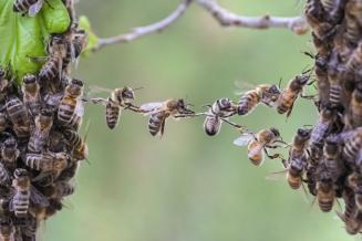 В Курской области содержится 39449 пчелосемей
