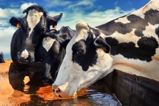 Ученые в РФ создали уникальную тест-систему для выявления у коров вируса герпеса