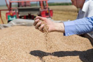 Минсельхоз не отметил изменение сроков выдачи сертификатов на поставки зерна