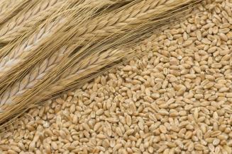 Кировская область обеспечена семенами на предстоящую посевную