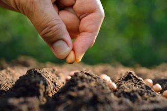 Орловская область может стать центром развития семеноводства