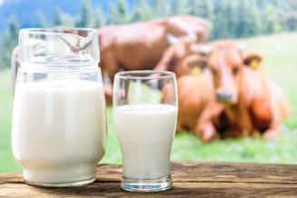 Пермские аграрии увеличили производство молока