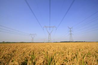 Стоимость электроэнергии для фермеров могут снизить до тарифов населения