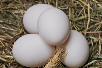 В Смоленской области снизились цены на куриные яйца